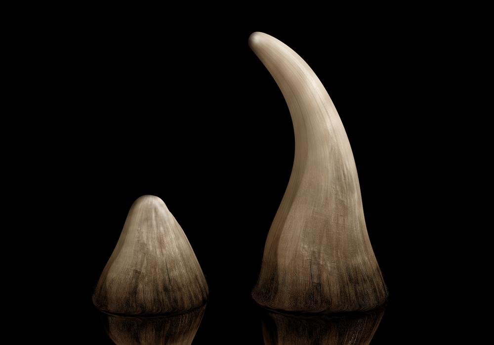 GIBS obvinila policistu a dva muže, chtěli prodat vysoce ceněný nosorožčí roh do Asie
